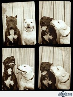 Kiss in the Photo Booth