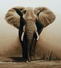 Welcome to the fine art gallery and online shop of Richard Symonds where you can buy limited edition prints of elephants, tigers, lions and other wildlife art. Elephants Photos, Elephant Pictures, Bull Elephant, Elephant Love, Wildlife Paintings, Wildlife Art, African Elephant, African Animals, Majestic Animals