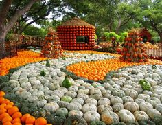 Autumn at the Arboretum! Come celebrate the opening of our annual Pumpkin Village today in the garden! Showcasing 65,000 pumpkins, gourds, and squash via Dallas Arboretum & Botanical Garden FB