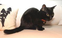 黒猫 - Google 検索