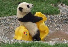 such a cute panda are playing human stuff