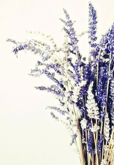 Lavender Photograph, White Lavender, Purple, Vintage, White, Shabby Chic, Sprigs, Wall Decor, Lavender Sprig, Lavender 8x10 Photo Print