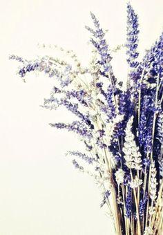 Lavender Bunch Photograph White Lavender Purple by StudioClaire, $12.00