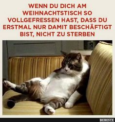 Wenn du dich am Weihnachtstisch so vollgefressen hast. Source by udomuellertelekom dog dog memes dog videos videos wallpaper dog memes dog quotes dogs dogs pictures dogs videos puppies puppy video Funny Shit, Funny Posts, Funny Memes, Jokes, Funny Stuff, Cat Memes, Random Stuff, Super Funny, Funny Cute