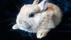 #bunny #rabbit #mylittlebaby