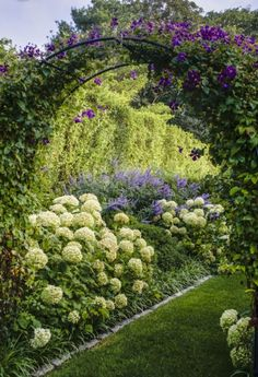 Pretty garden design. White hydrangea perennial border with purple morning glories on black arch arbor #gardendesign