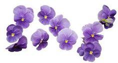 Resultado de imagen para png purple tumblr
