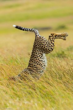 ~~Be Different | Cheetah Yoga | by Mohammed Alnaser~~