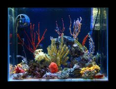 50L Azoox by Testerpl - UltimateReef.com