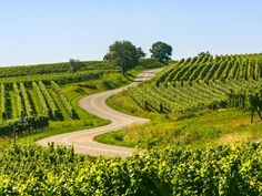 Landskap i Champagne- Ardennes.