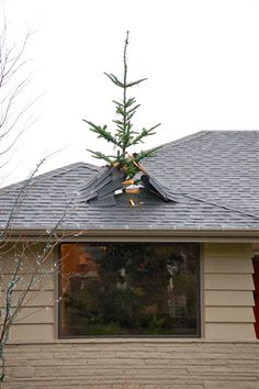 Griswold style Christmas tree through the roof