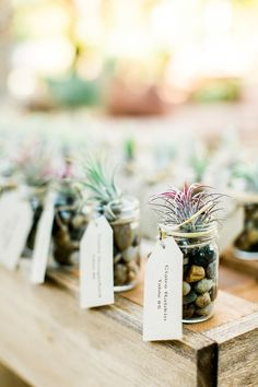 air plant wedding favors - photo by Cara Robbins Studio http://ruffledblog.com/sweet-ranch-wedding-in-las-vegas