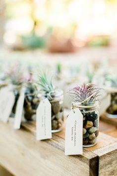 air plant wedding favors - photo by Cara Robbins Studio http://ruffledblog.com/sweet-ranch-wedding-in-las-vegas