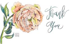 Thank you card design - watercolor Peony, calligraphy, watercolor flower www.kberriganart.com