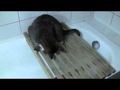 Как приучить кота купаться в ванной - YouTube
