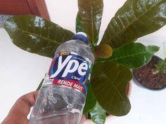 House Plants Decor, Plant Decor, Yard Landscaping, Water Bottle, Make It Yourself, Youtube, Bambi, Diva, Gardening
