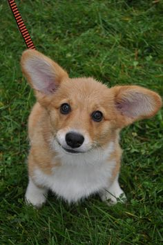 Are you kidding me ?! Look at his ears !! I just wanna squeeze him !!