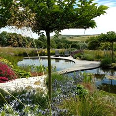 Sinuous decking dissects this natural-looking pond by Ian Kitson Landscape architect