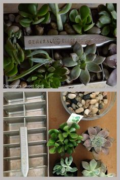 Upcycled ice cube tray into succulent planter