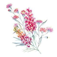 Australia Flower stock photos and royalty-free images, vectors and illustrations Pretty Flower Tattoos, Flower Tattoo Designs, Flower Designs, Wildflower Drawing, Wildflower Tattoo, Australian Wildflowers, Australian Native Flowers, Flower Images, Flower Art