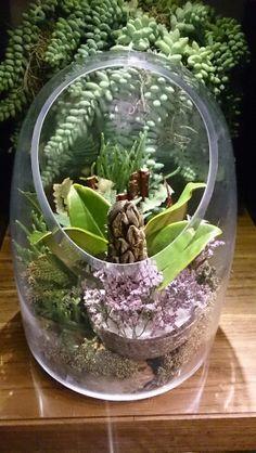 Terraıum, succulent.