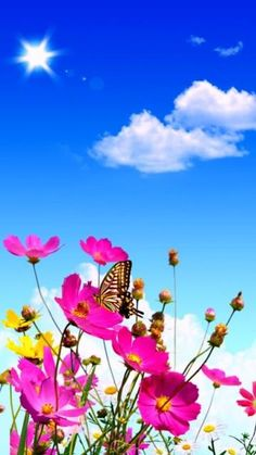 Baixe Verão 360 X 640 Wallpapers - 360 x 640 Rainbow Wallpaper, More Wallpaper, Colorful Wallpaper, Flower Wallpaper, Hd Nature Wallpapers, Beautiful Flowers Wallpapers, Pretty Wallpapers, Flower Backgrounds, Wallpaper Backgrounds