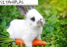 Losconejosson animales muy inteligentes, cariñosos, divertidos y aunque nos sorprenda también son sociables. Hoy Sandra Tapiador desitandplas.com, nos da las claves para entender a nuestros conejos, fijándonos en su lenguaje corporal #conejo #conejos #blog #comportamiento #educación