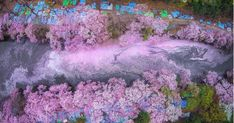 17 Magical Pics Of Japan's Cherry Blossom By National Geographic   Bored Panda