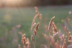 Last light by Infomastern, via Flickr