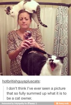 26 Feelings All Cat Owners Can Relate To