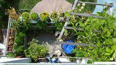 Gardening, Aquarium, Goldfish Bowl, Lawn And Garden, Aquarium Fish Tank, Aquarius, Horticulture, Fish Tank