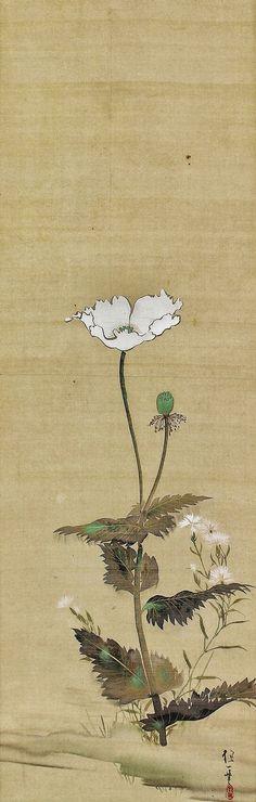 White poppy. Sakai Hoitsu. Japanese hanging scroll. Edo period.
