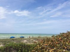 See why Honeymoon Island State Park's undeveloped beaches and gorgeous views has made it Florida's most visited state park the past 6 years. Honeymoon Island, Spring Training, Most Visited, Road Trips, 6 Years, State Parks, Islands, The Neighbourhood, The Past
