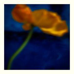 Complice - Artist : Gallery - Gyslain Yarhi - Beauty Beauty Editorial, Flowers, Artist, Plants, Photographers, Artists, Plant, Royal Icing Flowers, Flower