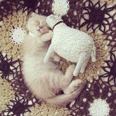 Sleepy together