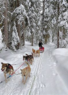 Ski Mountain, Canadian Winter, Adventure Bucket List, Man And Dog, Local Parks, Cross Country Skiing, Wild Dogs, Best Places To Travel, Winter Activities