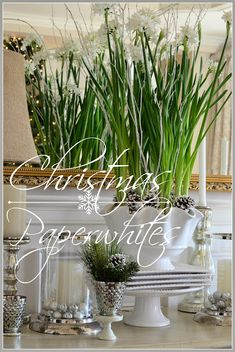 CHRISTMAS PAPERWHITES How to grow them, how to take care of them and ideas to make them extra beautiful! stonegableblog.co