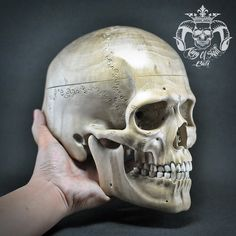 Bigger Than Live Size Hand Carved Human Skull From Wood Super Realistic Great Memento MoriFind this skull on Etsy