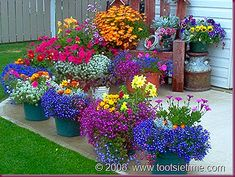 List of Container Flowers