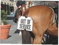 Police Horse: Out of Service. Cops on a donut break with a sense of humor! Seen in San Jose, California. Funny Horse Pictures, Funny Horses, Cute Horses, Horse Love, Beautiful Horses, Funny Cats, Funny Animals, Cute Animals, Police Humor