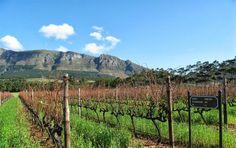 Constantia Uitsig Wine Estate Wine Time, Wineries, Touring, South Africa, Vineyard, Coastal, Ocean, River, History