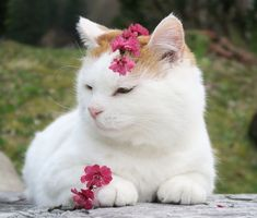 White Kittens, Cute Cats And Kittens, I Love Cats, House In Nature, Pretty Cats, Cute Funny Animals, Cat Lovers, Chibi, Twitter