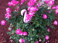 Oh, hell yeah. Roses and a flamingo.