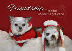 Harley and Teddy - National Mill Dog Rescue's Christmas card http://www.cafepress.com/nationalmilldogrescue/11887851 .