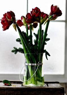Få en härligare upplevelse av dina julblommor och presentera dem på ett nytt och spännande sätt. Här våra finaste tips.