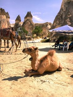 Baby camel with Cappadocia's fairy chimneys in the background at Pasabagi near Goreme. Travel guide to Turkey. Great Places, Places To See, Funny Animals, Cute Animals, Baby Camel, Famous Fairies, Sunset Point, Visit Turkey, Before Sunrise