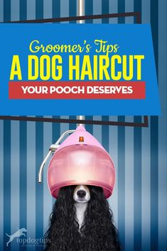 A Dog Haircut Your Pooch Deserves Puggle Puppies, Fluffy Puppies, Dog Grooming Tips, Dog Grooming Business, Puppy Supplies, Dog Haircuts, Great Dane Puppy, Black Lab Puppies, Happy Dogs