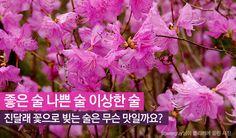 우리 술 이야기 10- 진달래 꽃으로 빚는 술, 면천두견주 http://www.insightofgscaltex.com/?p=18220