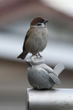 I know, it's ironic and a little tacky. A Sparrow sitting on the head of a Sparrow.(bh)