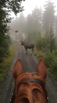 Funny Horses, Scary, Trail, Facebook, Shit Happens, Videos, Im Scared, Macabre
